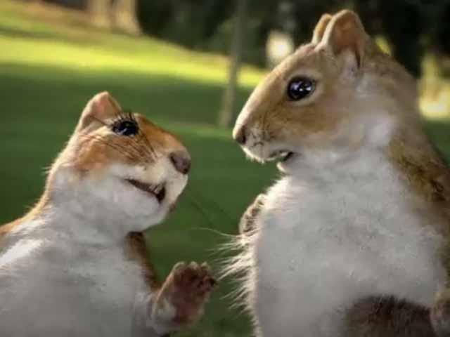 """Kit Kat """"Squirrels"""""""